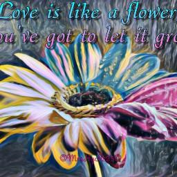 freetoedit love flower beautiful quotesandsayings
