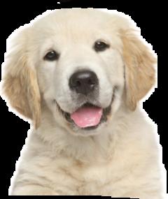 dog freetoedit