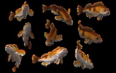 frstickers fish sea freetoedit