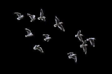 ftestickers birds freetoedit