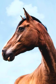 freetoedit horse animal sky portrait