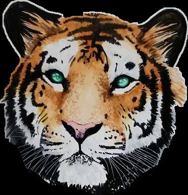 #тигр