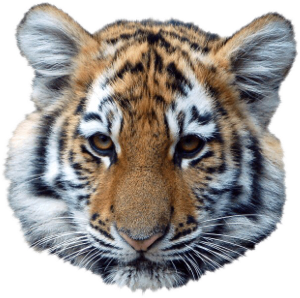 #animals #tiger#freetoedit