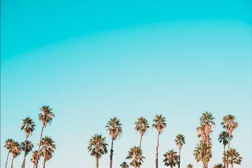 freetoedit tree palm blue sky