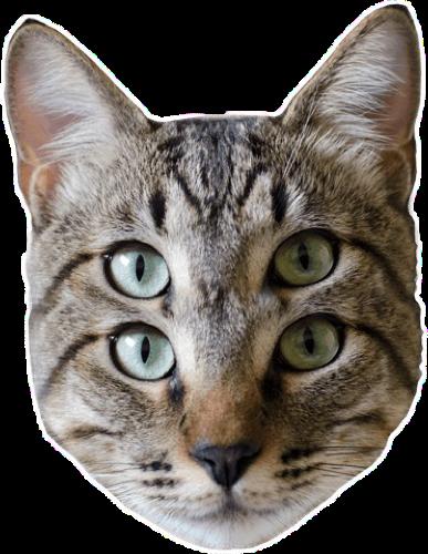#hahaha #cat#freetoedit