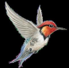 ftestickers freetoedit bird nature