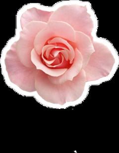 flor flower cute lindo 🌸
