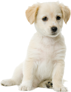 dog puppie puppies mustard cream freetoedit