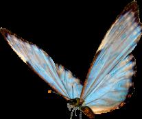 бабочка freetoedit