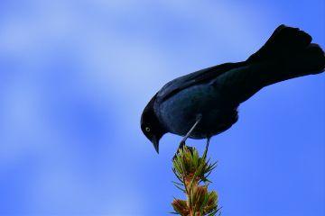 angeleyesimages birds birdie naturephotography nikon