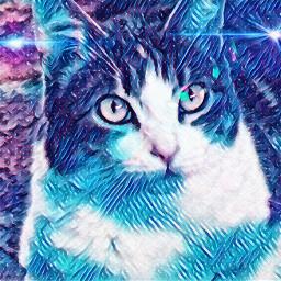 luna lunaalphacat looktothestars galaxymagiceffect starcat