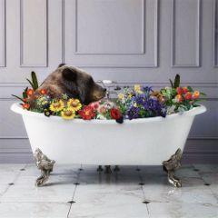 bestlife lifegoals relaxation bear floral