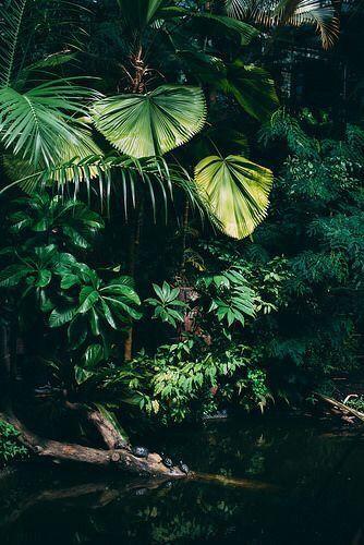 Dark Plant Aesthetic