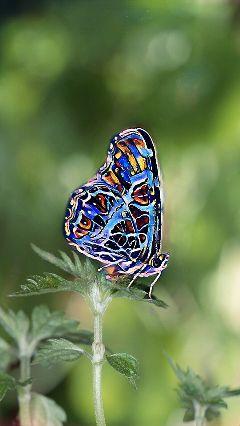 butterfly picsart edit