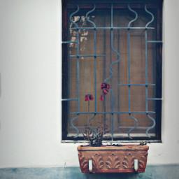 dpcwindowboxes exploringthecitystreets house simplicity window
