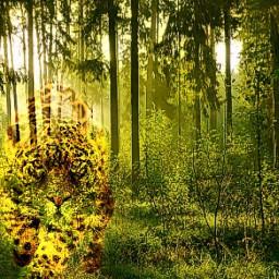 Jaguar woods bigcat Meow Forest jaguar meow