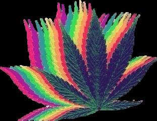 марихуана лист листочекаххаха листок листмарихуаны