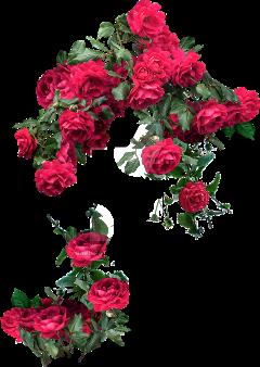 ftestickers flowers rose freetoedit