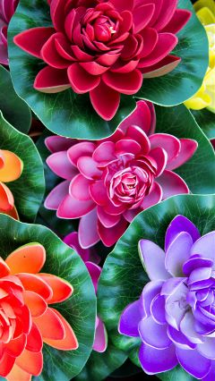 freetoedit wallpaper flowers colorful wallpapers