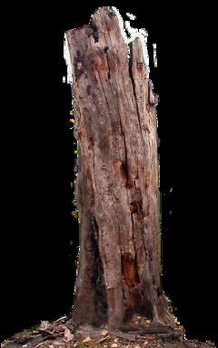 tree deadtree freetoedit