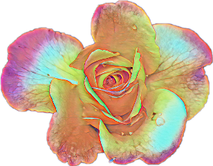 rose stickers flower flowerpower freetoedit