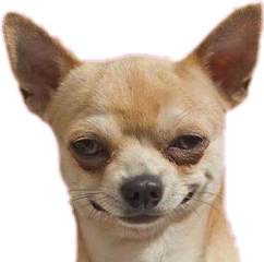 meme chihuahua chilaquil freetoedit