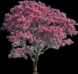 tree pink freetoedit
