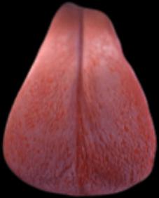 tongue snapchat dogfilter dogefilter dog
