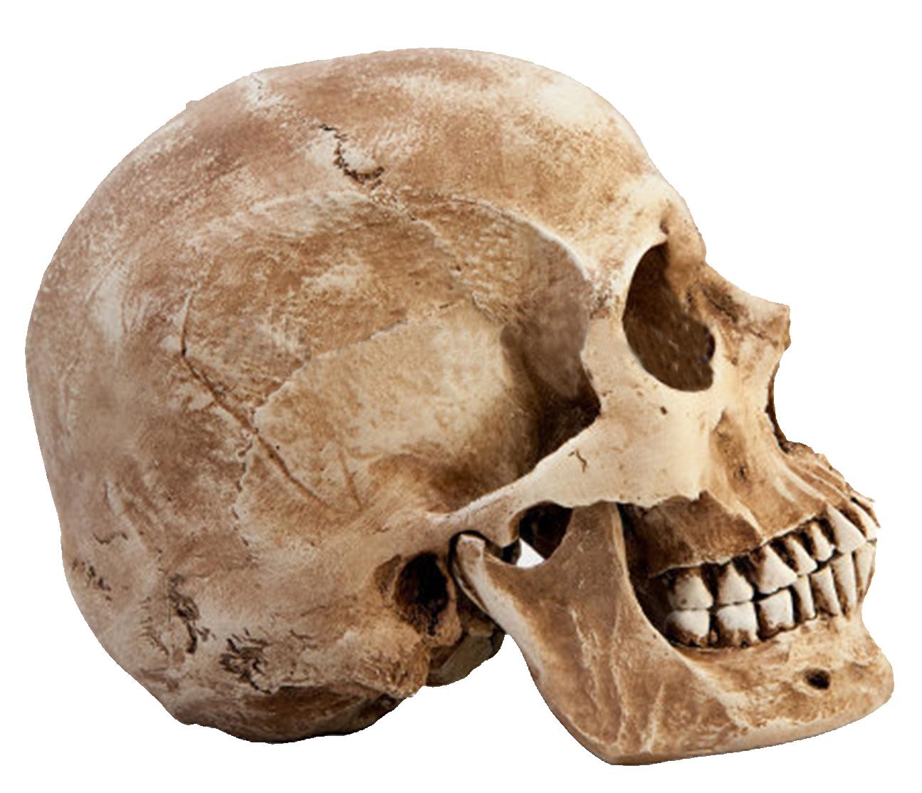 skull sticker by momo
