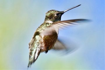 angekeyesimages hummingbird hummingbirds colorful imstagram