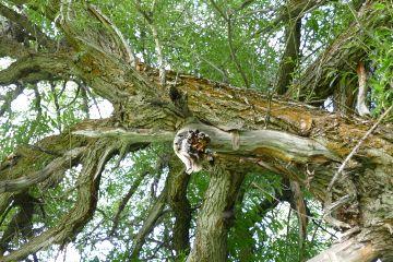 angeleyesimages tree trees nature landscape