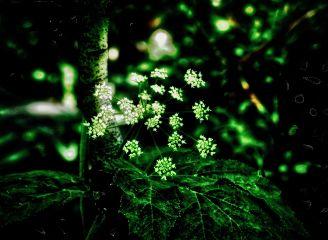 angeleyesimages landscapephotography nature naturephotography flowers