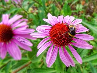 macro flower insects nature garden