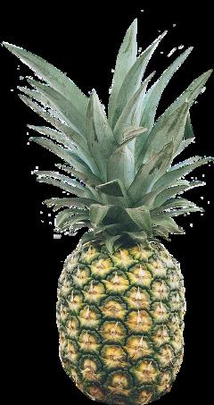 ftestickers fruit pineapple juicy