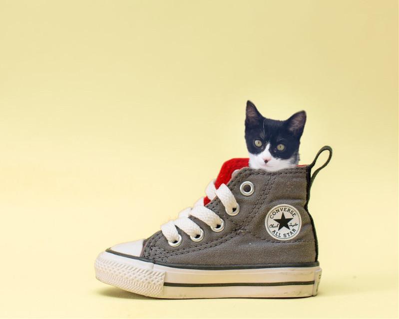 Chica #pets #mypet #cute #catsofpicsart #funny  #puppie