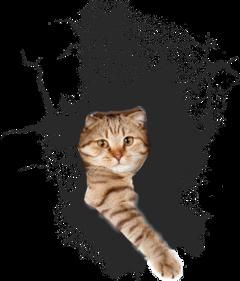 ftestickers catstickers cat hole freetoedit