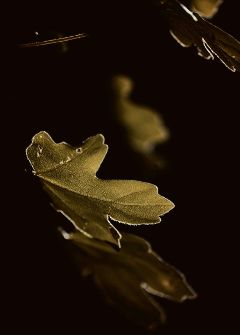 leaf black dark