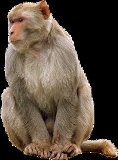 monkey freetoedit