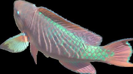pez fish tumblr aethetics grunge