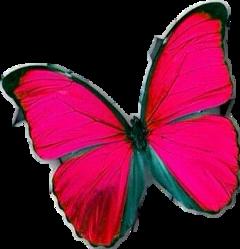 mariposa buterfly freetoedit