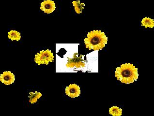 ftestickers flower freetoedit