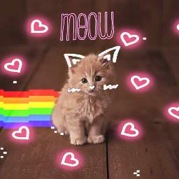 freetoedit neonheartstickerremix nyan_cat kitty kitten