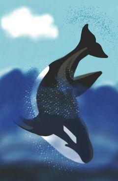wdpwhale