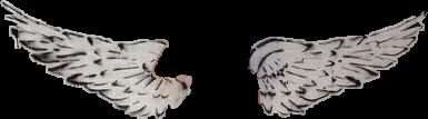 wings angel angelwings badass fantasy freetoedit
