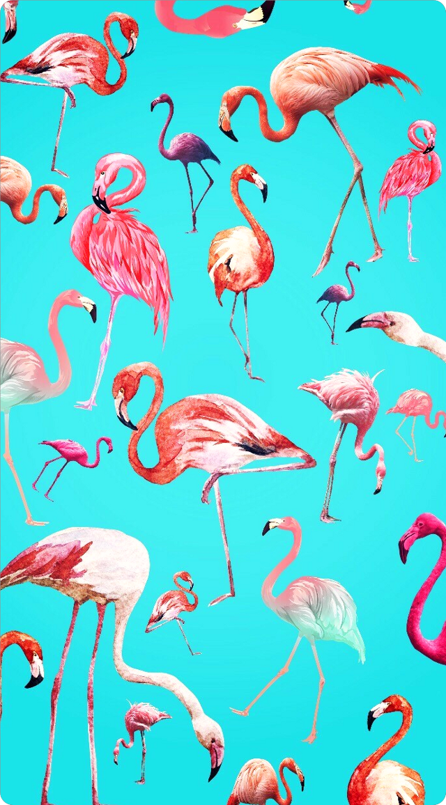 #ftestickers #background #wallpaper #flamingos