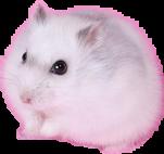 hamsterbusya freetoedit