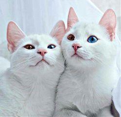freetoedit cats curious