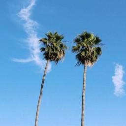 freetoedit summer palmtrees sky