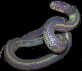 snake aesthetic freetoedit