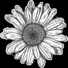 flower beautiful flowerslovers freetoedit